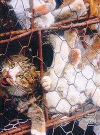 Gruppenavatar von Gegen Tierquälerei!!!!!!