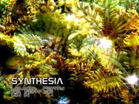 Synthesia Launch Party@Vin In