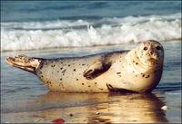 Gruppenavatar von Hallo Sie...,Ja bitte? - Kann ihr Hund Sehen?...natürlich kann er Sehen! ... Ohh dann ist es ja ein Seehund!