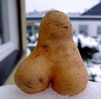 Gruppenavatar von Freunde sind wie Kartoffeln! wenn man sie isst sind sie tot.