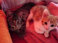 Gruppenavatar von Katzenfreunde