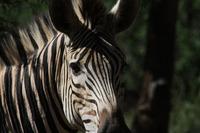 Abenteuer Wildnis - Afrika@ÖGB-Heim