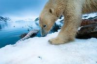 Abenteuer Arktis - Vortrag von Florian Schulz