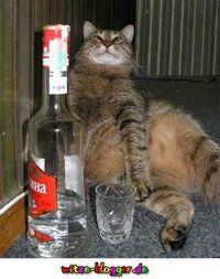 Gruppenavatar von Wenn ich trinke habe ich alle lieb!
