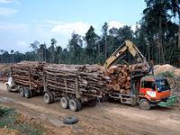 Gruppenavatar von Google zerstört den Regenwald