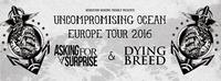 Asking For A Surprise (Ger) :: Dying Breed (Ger) :: Chasing Sounds@Kramladen