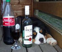 hauptberuflicher_Alkoholiker