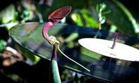 Fluc - [dunkelbunt] und die Trommelfelldoktoren (DJ Session)@Fluc / Fluc Wanne