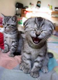 Gruppenavatar von *Lachen wenn's nicht sein darf und dann nicht aufhören können...*