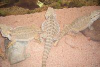 Gruppenavatar von Reptilien als Haustiere