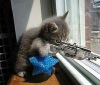 Gruppenavatar von Ich befürchte, meine Katze plant meine Ermordung sehr sorgfältig.