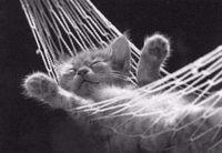 wozu schlafen?schlafen kann ich auch noch wenn ich tot bin...