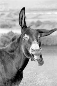 Ich lache wenns NICHT sein darf und dann kann ich NICHT mehr aufhören!