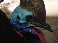 BLUEblut + SMEGMAgnom@ Chelsea - wtf is that dinosaur bird?@Chelsea Musicplace