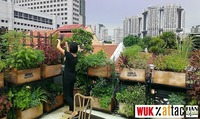 WUK%attac-Filmabend: Edible city. Grow the revolution@WUK