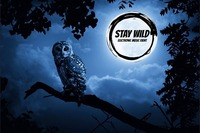 ★ Stay Wild ★ Afterhour ★@The ZOO Music:Culture