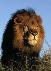 ☼Uns Löwen scheint die Sonne aus dem Gesicht☼