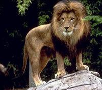 Gruppenavatar von Sternzeichen Löwe sind die allerbesten--> Niemand kann sie topen!