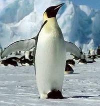 batman ist ein Pinguin, des mit Fledermaus is nur a verschwörung