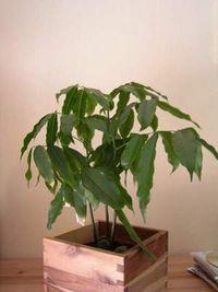 Gruppenavatar von Ich leiste meinen Pflanzen aktive Sterbehilfe