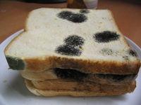 Gruppenavatar von Brot kann schimmeln- was kannst du?