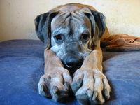 big-dogge