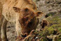 Tierfotografien83
