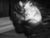 cat_94