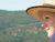 Daisyflower