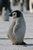 Pingu-Girl