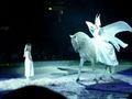 cavallo - Fotoalbum