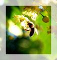 andi086 - Fotoalbum