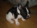 Mein Hund 75713588