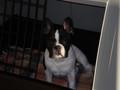 Mein Hund 75713589