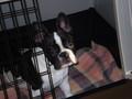Mein Hund 75713590