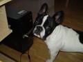 Mein Hund 75713592