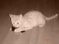 --honigmelone-- - Fotoalbum