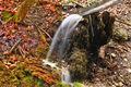 forums-bilder 57508215