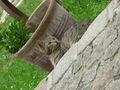 chrisi_cat - Fotoalbum